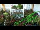 Комнатные растения у меня на балконе Часть 1 я