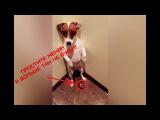 ТОП 7 ПРОВИНИВШИХСЯ СОБАК #8 |Самый крутой ролик за 2018год!!! Funny Guilty Dogs Compilation!!
