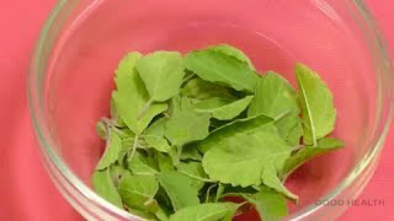 Simple remedy -Tulsi leaves is best medicine for cold    Home remedy