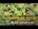 Пермакультурный лесосад 23 года процветания