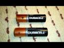 Замер емкости пальчиковых батареек. Стоит ли вообще покупать Duracell