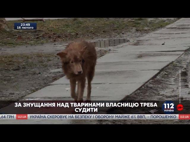 Когда собака не друг человека: Кто защитит жителей киевского микрорайона от стаи голодных хищников