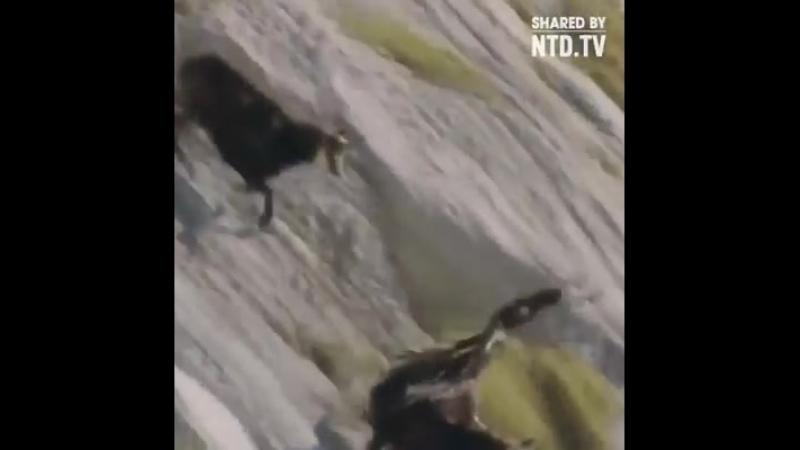 Қазақтың аспанында қалықтаған Қыран құсы