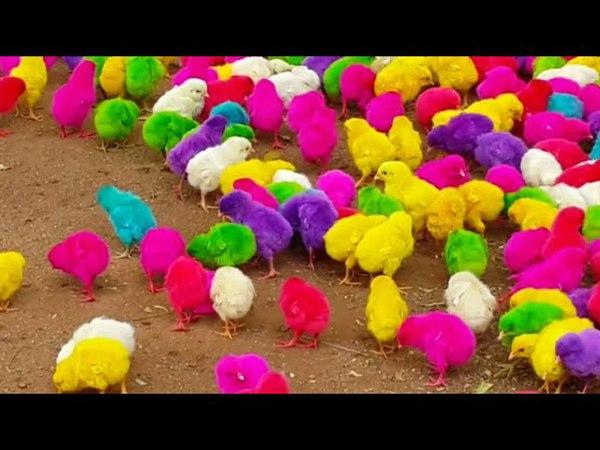 Motu Patlu New Episode 2018 Presant   Colorful Chicken   For Sale Amazing Videos,Motu Patlu New Movi