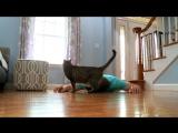 Если ты внезапно умер, то твой кот тебя спасёт или нет?