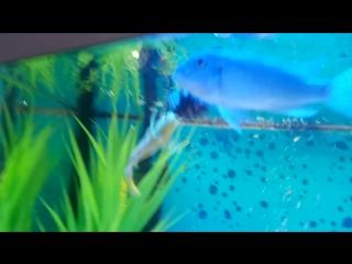 Гарик кормит рыбок