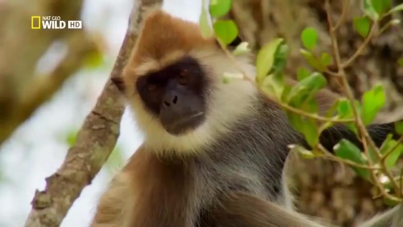 Шри Ланка Дикая природа