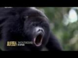 Музыка из проморолика Animal Planet - SOS дикой природы