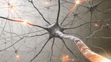Neuroplasticity How To Rewire Your Brain