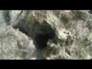 Морские ежи (Гваделупа)