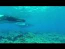 Невероятный фридайвинг в дикой природе Плавание с китами