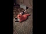 Габриэль играет с игрушкой