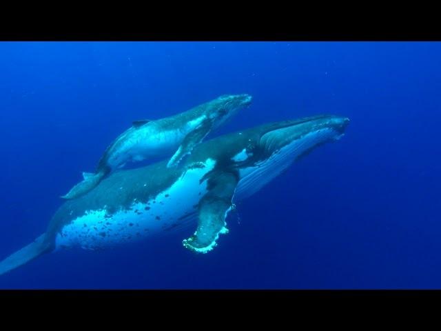 Пение Китов | Идеальный релакс помогает расслабится и уснуть!
