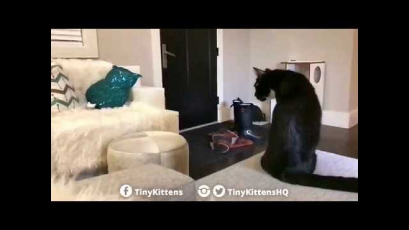 Two legged miracle kitten makes giant leap! TinyKittens.com