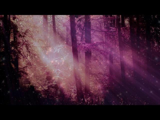 Spring - a New Beginning (15 minute daily meditation)