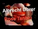 Albrecht Durer Rose Tantau