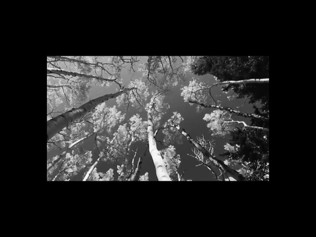 Doctor Flake - Cinema (Official Video)