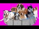 Смешные собаки прыгают в бассейн с краской. Развивающий Мультик Для Детей. Учим цвета на Английском