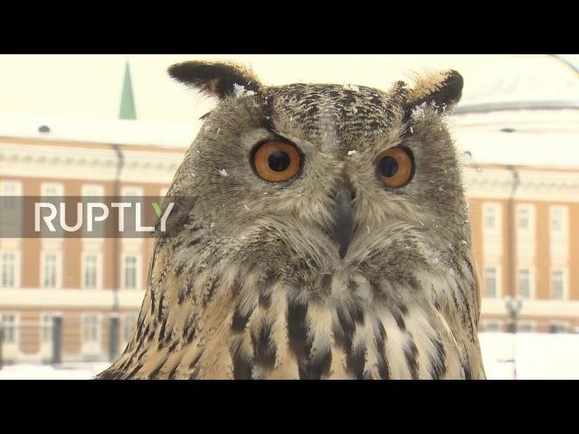 Russia: Meet the birds of prey that keep watch over the Kremlin