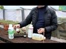 Используемые препараты при выращивании рассады томата