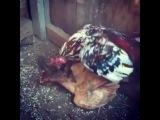 @ola_bilmez_tv on Instagram Xoruz g