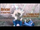 Mondulkiri Tent Camping Trip 10 Rescue of Young Oxen Stuck Down 10m Deep Hole at Dak Dam
