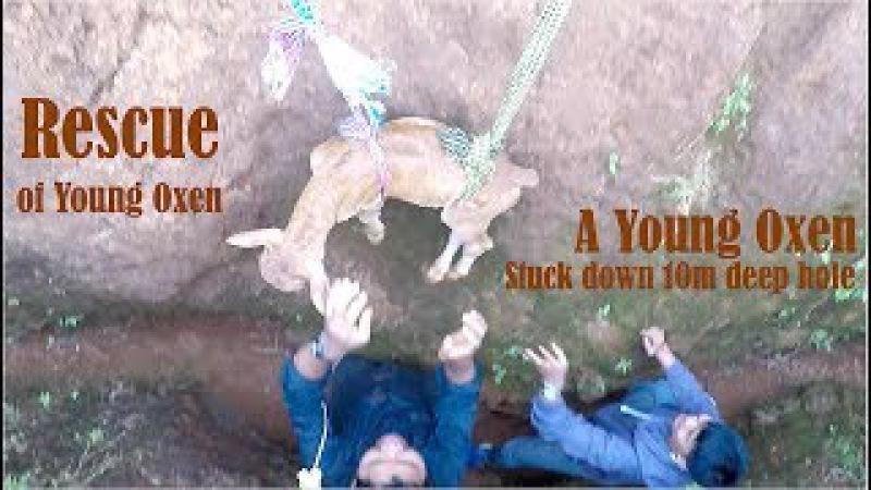 Mondulkiri Tent Camping Trip 10 - Rescue of Young Oxen Stuck Down 10m Deep Hole at Dak Dam