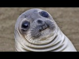 A Small Compilation of Some Hecking Sea Doggo (Seal) Videos (HECK)