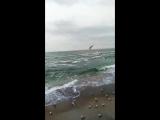 sea.... gulls..........
