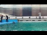 дельфинарий на Крестовском👏👏