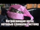 Потрясающие коты, которые сломали систему