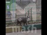 Москвичка выбросила 7 котят с балкона своей квартиры на 8-м этаже