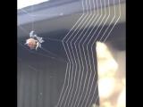 Расставляем сети правильно. Как паук плетет паутину