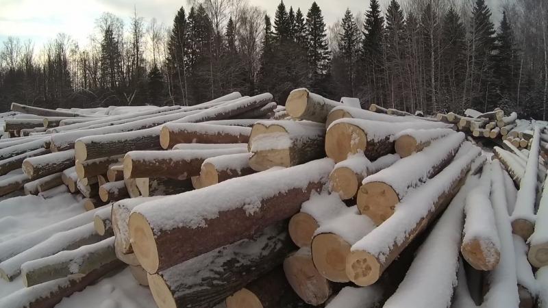 💡 Готовь СаНи Летом а СРУБЫ Зимой Заготовка замнего леса для Бань