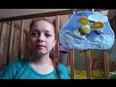 Вопрос -ответ по планшету Солнечный зайчик