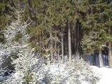Лежат пушистые снега - Исполнитель Николай Морозов ( Nikshanson )