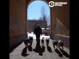 Человек на карте Как в смоленской деревне появился приют для собак