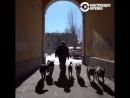 """""""Человек на карте"""": Как в смоленской деревне появился приют для собак"""