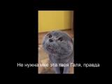 Кот жалуется