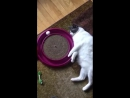 Кот лентяй