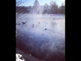 Уточки на Голубом озере