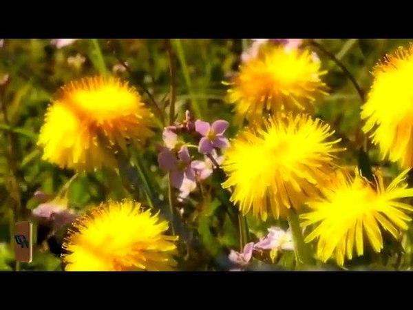 Conrad Winged Ascania - Kashmir (Simon OShine Remix)