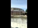 купание слоненка Ростовский зоопарк