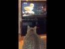 Милка любит смотреть мультики про Кота в сапогах