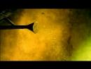 Би-2 - Моя любовь (2001)