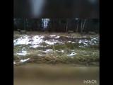 Олени-маралы в Смоленской области бегают по обочине
