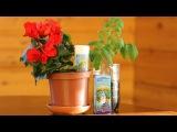 Как правильно поливать рассаду  Как снизить жесткость воды