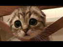 ПРИКОЛЫ С КОТАМИ/МИЛЫЕ КОТЯТА JOKES WITH CATS / LITTLE KITTENS