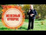 Железный купорос ➡ Как применять в саду осенью? 🌟 Полезные советы