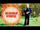 Железный купорос ➡ Как применять в саду осенью? 🌟 Полезные советы hitsadTV